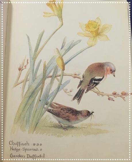 Daffodills & birds